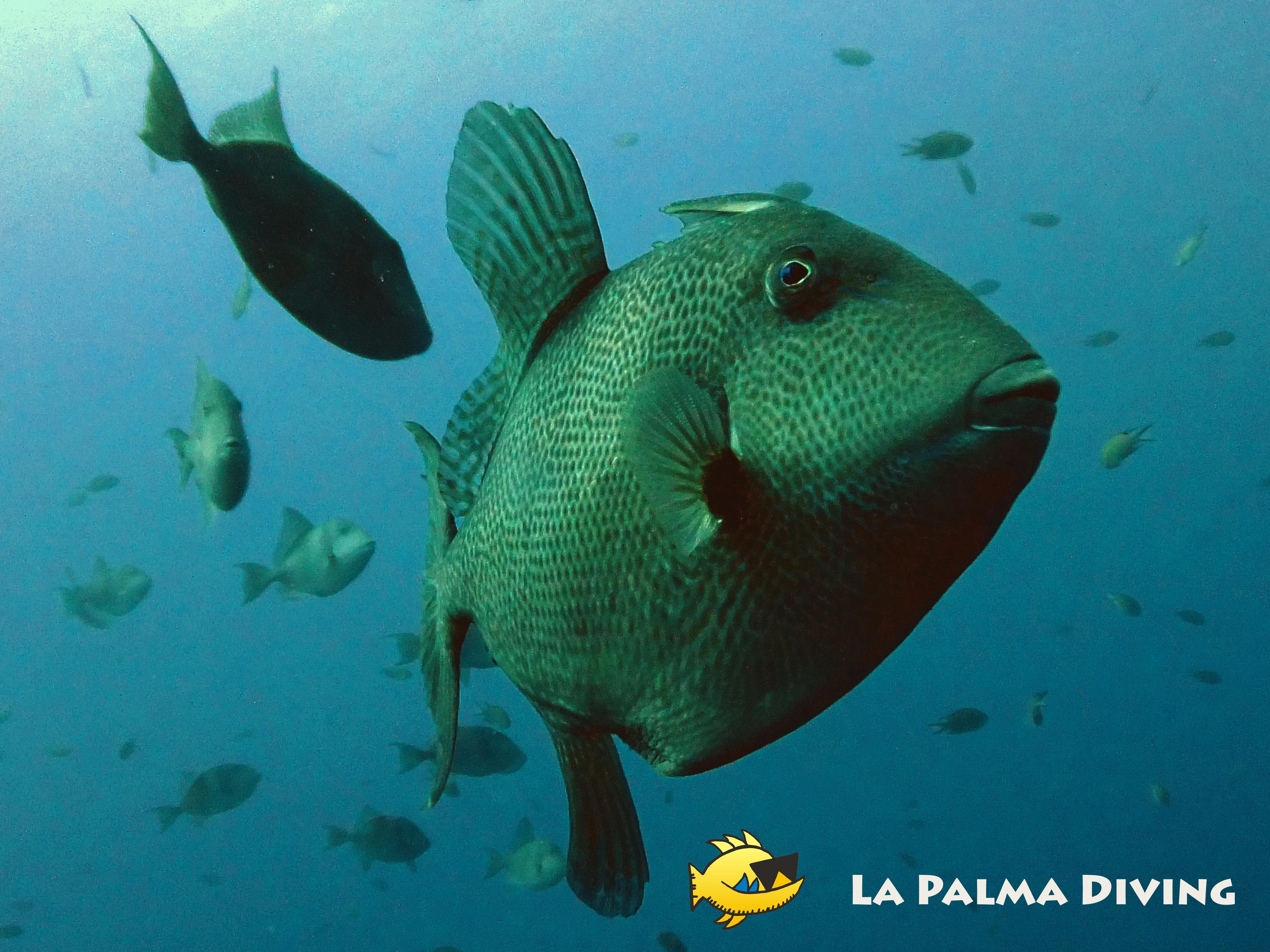 La Palma Diving